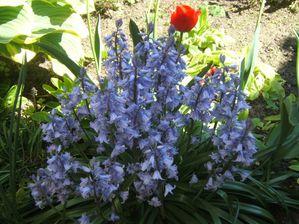 muguet-printemps-jardin-5892224522.jpg