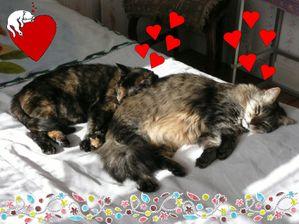 Soleil-et-chats-03.jpg