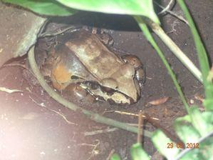Monteverde (8)