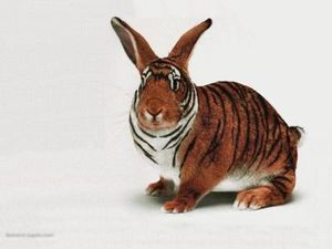tigerrabbit
