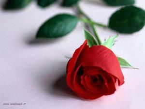 Red-Roses-too-copy.jpg