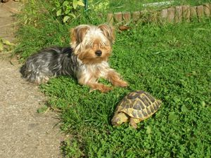 Chien&tortue
