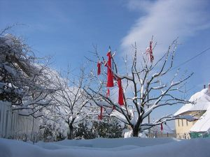 arbre-rouge-des-vaites-sous-la-neige-mars-2005.jpg