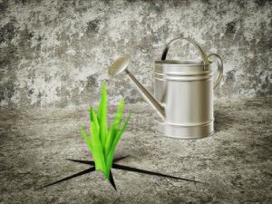 10130483-green-plants-grow-out-and-watering-can