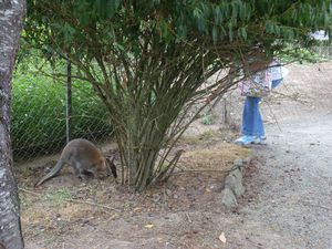 cache cache wallaby