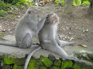 dsc01984-ubud-sacred-monkey-forest-sanctuary-13.jpg
