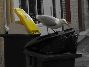 recyclage express (3)