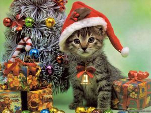 christmas-cat-wallpapers-1024x768.jpg