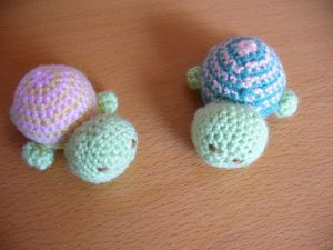 2010-02-18 Tortues r