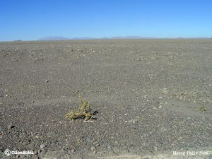 Desert_Atacama.jpg