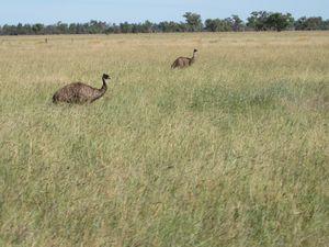 Australie-2012-bis 0469