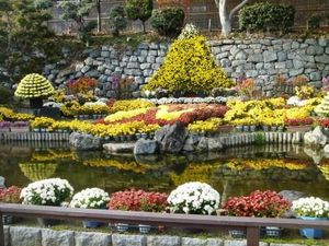 expo-de-chrysanthemes.JPG