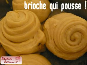 briochebouldoukpousse