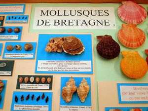 expo-coquillages-AFC-Ouest-2008-02.jpg