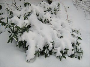 neige9-10-janv-10.jpg