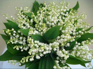 bouquet-muguet.jpg
