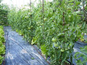 legumes-jardin-2010-001.JPG