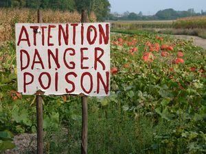 danger-poison
