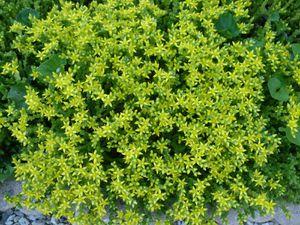 fleurs-rocaille.jpg