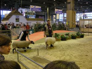 Moutons (3) [Résolution de l'écran]