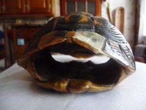 Tortue 4