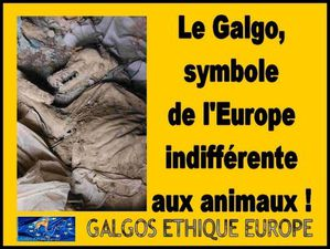GALGOS--LE-SYMBOLE-DE-L-EUROPE-INDIFFERENTE-AUX-ANIMAUX