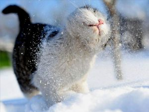 dieren_kat_winter_cats.jpg