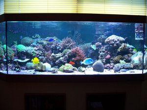 aquariums aquatic concept. Black Bedroom Furniture Sets. Home Design Ideas