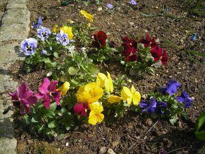 fleurs-avril-2010--4-.JPG
