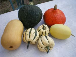 courges.jpg