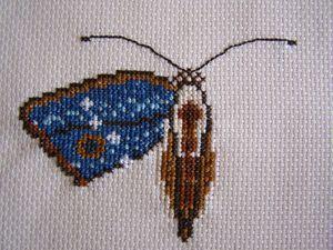 SAL papillon 2ème partie