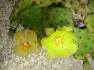 cactusjuinpetite008.jpg