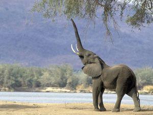 elephants-02.jpg