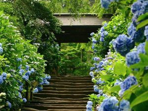 printemps-au-Japon.024.jpg