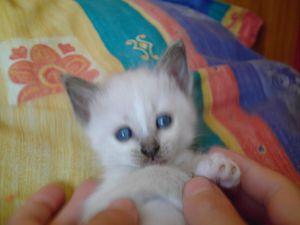 petite-blue--8-.JPG
