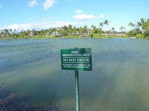 Hawaii-11-16 septembre 2011-panneau pond area
