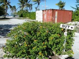 Kiritimati-21-28 mars 2012-Lantana out
