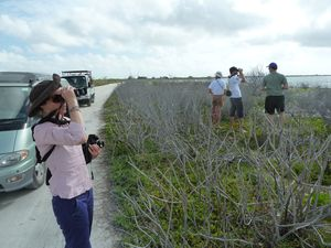 Kiritimati-21-28 mars 2012-Nicole & birdwatchers