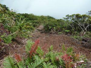 Tahiti-mont Aorai-6-7 avril 2012-landslide