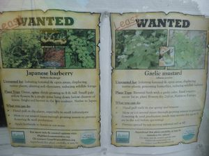Northampton-3-8 octobre 2010-wanted weeds