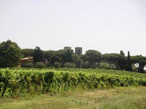 190-Vignoble au nord de Rome