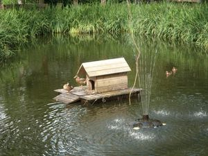 marre-aux-canards.jpg