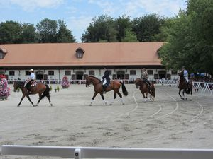 Haras national : les cavaliers