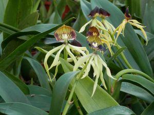 orchidees-022.JPG