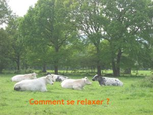 VACHES-cool.jpg