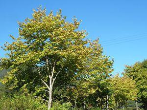 automne Plaine des Palmistes 2