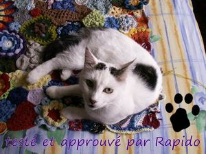PFF_20120715_rapido.JPG