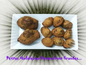 Petties Madeleines 3