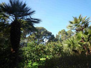 verger et palmier