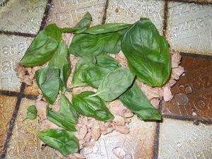 Derniere-salade-d-ete-etape-1--500-.jpg